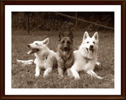 Freyja od Kunovského lesa, Carlos Tiris Bohemia, Nathan La Blankpapilio